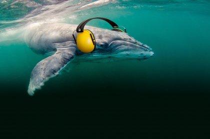 Help protect the seas of Ibiza!