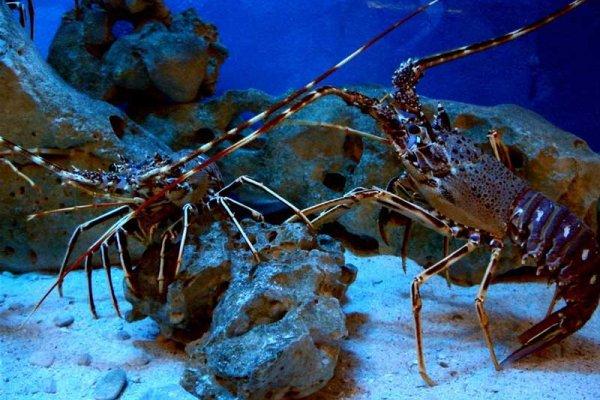 Aquarium Cap Blanc Ibiza Spotlight